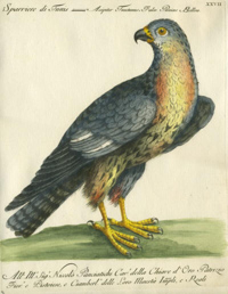 Vogel13-moxtexpjan15.jpg